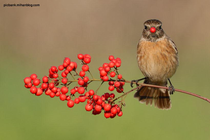 عکس ، عکس های زیبا ، عکس حیوانات ، عکس پرنده ، پرنده ، تغذیه پرندگان ، پرندگان ، عکس پرندگان ، میوه درختی ، گنجشک ، عکس گنجشک ، پرنده کوچک ، پرنده کوچولو ، عکسهای زیبا ، غذا خوردن حیوانات ، غذا خوردن پرندگان ، حیوانات