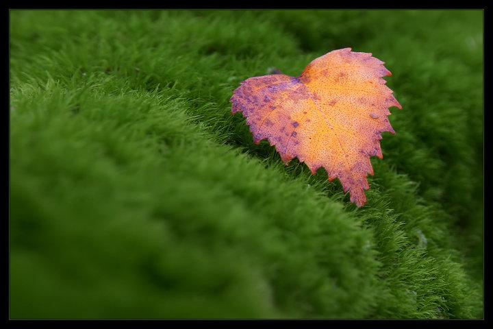 عکس ، عکس های زیبا ، عکسهای زیبا ، عکس های لطیف ، عکس های ساده ، عکس های هنری ، برگ ، برگ درخت ، برگ درختان ، برگ ریزان ، برگریزان ، برگ خشک ، برگ خشکیده ، برگ خشک شده ، برگ خشک درخت ، برگ خشک درختان ، برگ خشکیده درخت ، برگ خشکیده درختان ، پاییز ، فصل پاییز ، عکس پاییز ، عکس های پاییز ، عکسهای پاییز ، عکس های فصل پاییز ، عکسهای فصل پاییز ، برگ زرد ، برگ زرد درختان ، طبیعت ، طبیعت پاییز ، طبیعت پاییزی ، منظره پاییز ، منظره پاییزی ، مناظر پاییز ، مناظر پاییزی ، منظره طبیعت ، منظره ، طبیعت ، مناظر طبیعت ، منظره طبیعی ، مناظر طبیعی ، مدل نقاشی ، مدل برای نقاشی ، نقاشی پاییز ، نقاشی برگ درختان ، مدل نقاشی پاییز ، مدل نقاشی منظره طبیعت ، مدل نقاشی منظره پاییز ،