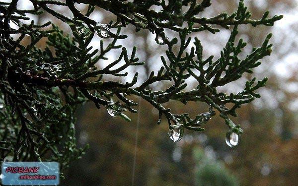 عکس | عکسهای زیبا | عکس های دیدنی | عکسهای خلاقانه | عکسهای مبتکرانه | عکس باران | عکسهای بارون | عکس هوای بارانی | art | Rain | ابتکار | ابتکار و خلاقیت | ایده | باران | باران عکس | بارندگی | تصاویر زیبا | تصاویر زیبای هنری | تصاویر هنری | جالب و خنده دار | خلا قیت های خنده دار | خلاق | خلاق بودن | خلاق و خلاقیت | خلاقان نمونه | خلاقیت | خلاقیت های جالب | دانشمند | سیگار | علم هنر | عکاسی | عکاسی در باران | عکس های زیبا | عکس های هنرمند | عکس های هنری | عکس های هنری زیبا و دیدنی | عکس هایی از دنیای هنر | مخترع | مخترع جوان | مخترع پیر | نوین | هنر | هنر و هنروری | هنر چیست | هنرمند | هنرمند نمونه | هنرمندی | هنری | هنری بودن | هنری و باران | باران | تنهایی | قدم زدن در باران | منظره بارانی | بارانی | بارونی | بارون | چتر | چترهای زیبا | زیر باران | پشت شیشه | شیشه خیس | رانندگی در باران | قدم زدن زیر بارون | هوای پاییزی | پاییزی | پاییز | باران پاییزی | نم نم بارون | نم نم باران | بارندگی | بارشهای پاییزی | نزولات آسمانی | بارش های پاییزی | بارندگی های پاییزی | خیسی | رطوبت | هوای تازه | هوای رطوبی | هوای مرطوب | هوای خنک پاییز | دلتنگی | احساسی | عکس احساسی | عکسهای احساسی | دلتنگی های پاییزی | هوای دونفره | عشق | عشق و حال | عاشقی | عاشق شدن | عاشق شدن در باران | چتر دو نفره | چترهای زیبا | چتر خیس | چترهای رنگارنگ | بوی بارون | بوی باران | بوی خاک | خاک خیس | خاک باران خورده | زمین خیس | زمین خیس شده | زمین بارون خورده | بارش باران |