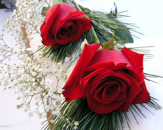 عکس ، عکس های زیبا ، عکس های خفن ، والپیپر ، والپیپرهای زیبا ، والپیپرهای خفن ، گل ، گل های زیبا ، گل سرخ ، گل های سرخ ، عکس گل سرخ ، عکس گل های سرخ ، عکس های گل سرخ ، عکس های گل های سرخ ، گل رز ، گل های رز ، عکس گل رز ، عکس های گل رز ، عکس گل های رز ، عکس های گل های رز ، گل سرخ زیبا ، گل های سرخ زیبا ، گل رز زیبا ، گل های رز زیبا ، شاخه گل ، عکس های شاخه گل ، دسته گل ، عکس های دسته گل ، دسته گل رز ، عکس های دسته گل رز ، دسته گل سرخ ، عکس های دسته گل سرخ ، مدل نقاشی ، مدل برای نقاشی ، نقاشی از گل ، نقاشی از گل رز ، مدل نقاشی گل ، مدل نقاشی گل رز ، مدل نقاشی گل سرخ ،