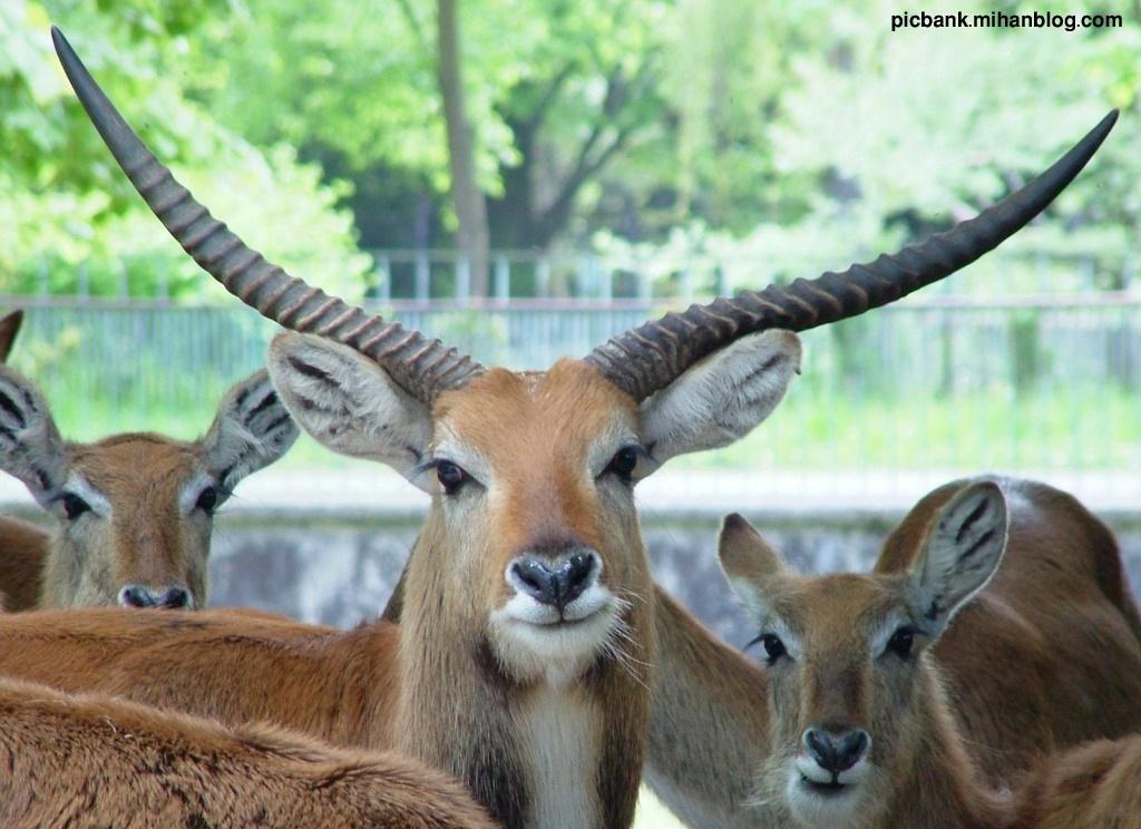 عکس ، عکس های زیبا ، عکسهای زیبا ، حیوانات ، عکس حیوانات ، عکسهای حیوانات ، والپیپر ، والپیپر زیبا ، والپیپرهای زیبا ، والپیپر حیوانات ، والپیپرهای حیوانات ، والپیپرهای زیبا ، والپیپر زیبا ، مدل ، مدل نقاشی ، مدلهای نقاشی ، نقاشی حیوانات ، نقاشی از حیوانات ، مدل نقاشی حیوانات ، مدل نقاشی از حیوانات ، روباه ، روباه قرمز ، گوزن ، غزال ، آهو ، گرگ خاکستری ، گرگ سفید ، گرگ ، قورد ، بوزقورد ، بوز قورد ، بوزگورد ، بوز گورد ، قورباغه ، قورباغه رنگی ، قورباغه سمی ، قورباغه های رنگی ، حلزون ، عکس حلزون ، گورخر ، گور