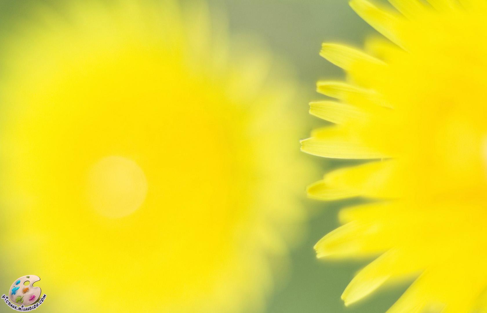 عکس ، عکسهای زیبا ، عکس های زیبا ، عکس باکیفیت ، عکس با کیفیت ، عکسهای باکیفیت ، گل ، عکس گل ، عکسهای گل ، گل و گیاه ، عکس گل و گیاه ، عکسهای گل و گیاه ، والپیپر ، والپیپرهای زیبا ، والپیپر زیبا ، والپیپر گل ، والپیپرهای گل ، والپیپر گل و گیاه ، گلهای زیبا ، گلها ، گل های زیبا ، عکس لطیف ، عکسهای لطیف ، والپیپر لطیف ، والپیپرهای لطیف ، گلهای رنگارنگ ، گل های رنگارنگ ، عکس گلهای رنگارنگ ، گل صحرایی ، گلهای صحرایی ، بهاری ، گل های بهاری ، گلهای بهاری ، بک گراند ، بکگراند ، عکس دسکتاپ ، عکسهای دسکتاپ ، عکس بک گراند ، عکسهای بک گراند ، بک گراند کامپیوتر ، دسکتاپ کامپیوتر ،