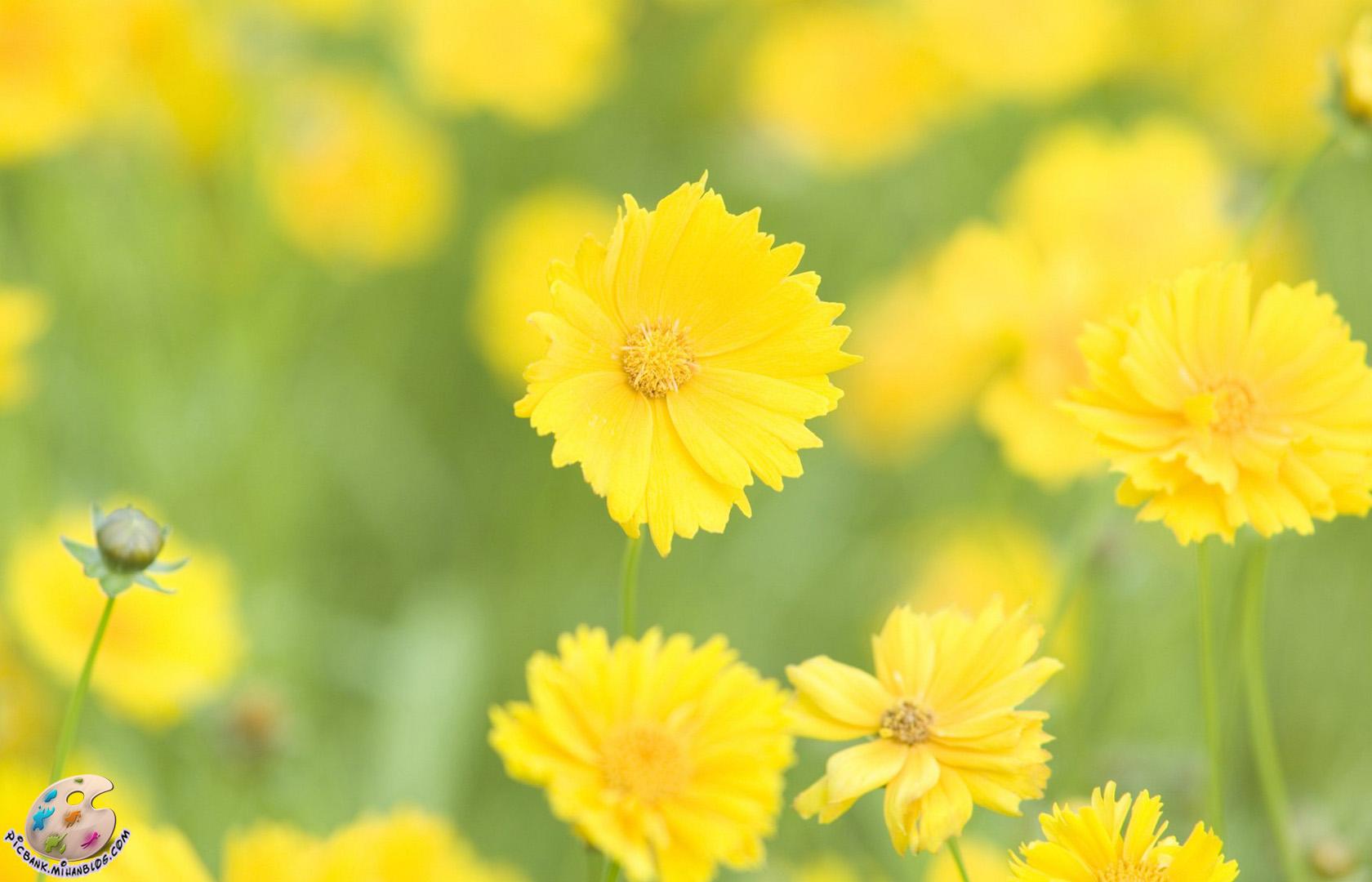 عکس ، عکسهای زیبا ، عکس های زیبا ، عکس باکیفیت ، عکس با کیفیت ، عکسهای باکیفیت ، گل ، عکس گل ، عکسهای گل ، گل و گیاه ، عکس گل و گیاه ، عکسهای گل و گیاه ، والپیپر ، والپیپرهای زیبا ، والپیپر زیبا ، والپیپر گل ، والپیپرهای گل ، والپیپر گل و گیاه ، گلهای زیبا ، گلها ، گل ها ، گل های زیبا ، عکس لطیف ، عکس دیدنی ، عکسهای دیدنی ، طبیعت ، طبیعت زیبا ، عکسهای لطیف ، والپیپر لطیف ، والپیپرهای لطیف ، گلهای رنگارنگ ، گل های رنگارنگ ، عکس گلهای رنگارنگ ، گل صحرایی ، گلهای صحرایی ، بهاری ، گل های بهاری ، بهار ، عکس بهار ، والپیپر بهار ، والپیپرهای بهار ، عکسهای بهار ، والپیپرهای زیبای بهار ، عکسهای دیدنی گل ، گلهای بهاری ، شکوفه ، شکوفه های زیبا ، شکوفه ها ، شکوفه بهاری ، شکوفه های بهاری ، شکوفه زیبا ، شکوفه زیبای بهاری ، شکوفه های زیبا ، شکوفه های زیبای بهاری ، عکس شکوفه ، عکسهای شکوفه ، والپیپر شکوفه ، والپیپرهای شکوفه ، والپیپر بهار ، والپیپرهای بهار ، بک گراند ، بکگراند ، عکس دسکتاپ ، عکسهای دسکتاپ ، عکس بک گراند ، عکسهای بک گراند ، بک گراند کامپیوتر ، دسکتاپ کامپیوتر ،