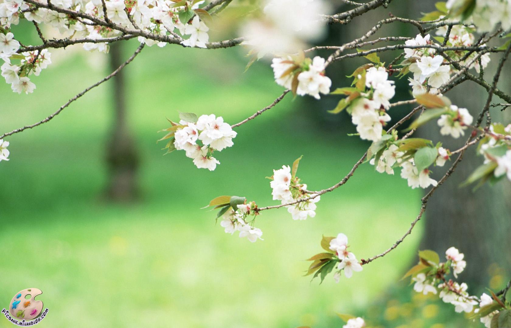 عکس ، عکس زیبا ، عکسهای زیبا ، والپیپر ، والپیپر زیبا ، والپیپرهای زیبا ، گل ، عکس گل ، عکسهای گل ، والپیپر گل ، والپیپرهای گل ، شکوفه ، عکس شکوفه ، عکسهای شکوفه ، عکس شکوفه ها ، عکسهای شکوفه ها ، والپیپر شکوفه ، والپیپر شکوفه ها ، والپیپرهای شکوفه ها ، والپیپر شکوفه ها ، شکوفه بهاری ، شکوفه های بهاری ، بهار ، باهار ، بهاری ، هوای بهاری ، منظره بهار ، منظره بهاری ، مناظر ، منظره ، مناظر بهار ، مناظر بهاری ، طبیعت ، بهار طبیعت ، شکوفایی طبیعت ، منظره طبیعت ، مناظر طبیعت ، منظره طبیعی ، مناظر طبیعی ، عکس طبیعت ، عکسهای طبیعت ، والپیپر طبیعت ، والپیپر بهار ، طبیعت بهار ، مناظر طبیعی ، عکس منظره طبیعت ، طبیعت بهار ، مدل ، مدل نقاشی ، مدل نقاشی گل ، مدل نقاشی شکوفه ، شاخه درخت ، پرشکوفه ، پر شکوفه ، شاخه پرشکوفه ، درخت پرشکوفه ، مدل نقاشی طبیعت ، مدل نقاشی منظره ، مدل نقاشی منظره طبیعت ، مدل نقاشی مناظر ، مدل نقاشی مناظر طبیعت ، مدل نقاشی درخت ،