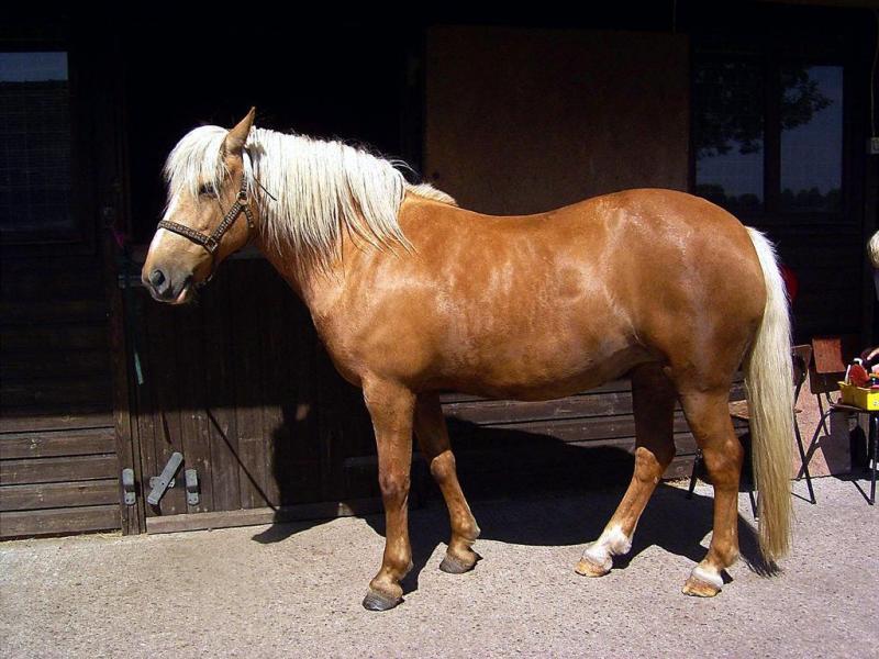 حیوانات ، عکس حیوانات ، عکس های حیوانات ، عکس های زیبای حیوانات ، مدل نقاشی از حیوانات ، نقاشی از حیوانات ، مدل نقاشی ، اسب ، عکس اسب ، نقاشی از اسب ،