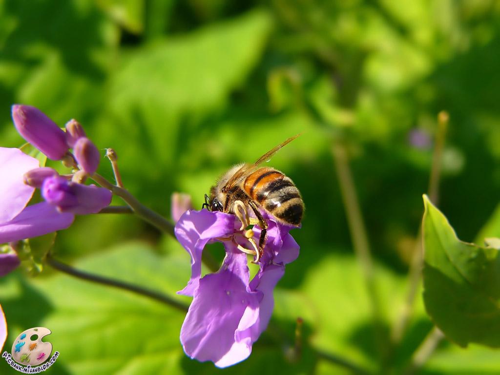 زنبور ، عکس زنبور ، عکسهای زنبور ، زنبور و گل ، گل و زنبور ، زنبور روی گل ، عکس زنبور روی گل ، عکسهای زنبور روی گل ، عکس ، عکسهای زیبا ، عکس های زیبا ، والپیپر ، والپیپر زیبا ، والپیپرهای زیبا ، عکس دیدنی ، عکسهای دیدنی ، والپیپر دیدنی ، والپیپرهای دیدنی ، جالب ، عکس جالب ، عکسهای جالب ، والپیپر جالب ، والپیپرهای جالب ، تصویر ، تصویر زیبا ، تصویر دیدنی ، تصویر جالب ، تصاویر ، تصاویر زیبا ، تصاویر جالب ، تصاویر دیدنی ، بکگراند ، بکگراند زیبا ، بکگراندهای زیبا ، بک گراند ، بک گراند زیبا ، بک گراندهای زیبا ، حیوان ، حیوانات ، عکس حیوانات ، عکسهای حیوانات ، والپیپر حیوانات ، والپیپرهای حیوانات ، بکگراند حیوانات ، بکگراندهای حیوانات ، بک گراند حیوانات ، بک گراندهای حیوانات ، جانوران ، جانوران مختلف ، جانور ، حیوانات زیبا ، حیوانات گوناگون ، جانوران گوناگون ، حیوانات مختلف ، مدل نقاشی ، مدل نقاشی حیوانات ، نقاشی حیوانات ، نقاشی از حیوانات ، آرشیو عکس ، آرشیو تصویر ، آرشیو عکس و تصویر ، مدل نقاشی زنبور ، نقاشی از زنبور ، picbank ، picbank.com ، picbank.mihanblog.com ، نگارخانه ، نشنال ژئوگرافی ، نشنال ژئوگرافیک ، عکس نشنال ژئوگرافیک ، عکسهای نشنال ژئوگرافیک ، والپیپر نشنال ژئوگرافیک ، والپیپرهای نشنال ژئوگرافیک ، عکس باکیفیت ، عکسهای باکیفیت ، والپیپر باکیفیت ، والپیپرهای باکیفیت ، عکس با کیفیت ، عکسهای با کیفیت ، والپیپر با کیفیت ، والپیپرهای با کیفیت ، عکس باکیفیت حیوانات ، عکسهای باکیفیت حیوانات ، عکس با کیفیت حیوانات ، عکسهای با کیفیت حیوانات ، عکس جالب حیوانات ، عکسهای جالب حیوانات ، عکس دیدنی حیوانات ، عکسهای دیدنی حیوانات ، عکس زیبای حیوانات ، عکسهای زیبای حیوانات ، HD ، عکس HD ، عکسهای HD ، والپیپر HD ، والپیپرهای HD ، عکس HD حیوانات ، عکسهای HD حیوانات ، جانورشناسی ، تحقیق روی حیوانات ، تحقیقات روی حیوانات ، حیات وحش ، حیوانات وحشی ، عکس حیات وحش ، عکسهای حیات وحش ، مدل نقاشی از حیوانات ، زیست شناسی ، زیست شناسی جانوری ، حشرات ، حشرات زیبا ، حشرات مختلف ، حشرات گوناگون ، عکس حشرات ، عکسهای حشرات ، والپیپر حشرات ، والپیپرهای حشرات ، حشره ، عکس حشره ، عکسهای حشره ، والپیپر حشره ، والپیپرهای حشره ، حشره شناسی ، تحقیق روی حشرات ، تحقیقات روی حشرات ، حشرات زیبا ، حشرات