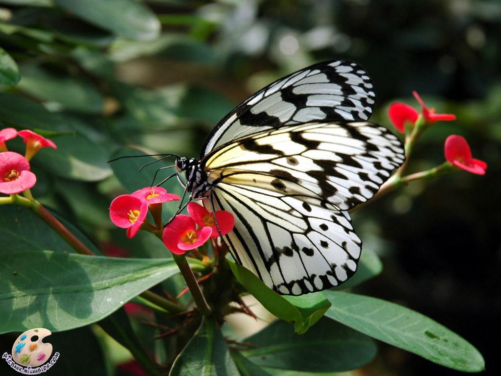 پروانه ، عکس پروانه ، عکسهای پروانه ، والپیپر پروانه ، والپیپرهای پروانه ، پروانه ها ، عکس پروانه های ، عکسهای پروانه ها ، والپیپر پروانه ها ، والپیپرهای پروانه ها ، پروانه های زیبا ، پروانه های رنگارنگ ، پروانه های رنگارنگ ، عکس ، عکسهای زیبا ، عکس های زیبا ، والپیپر ، والپیپر زیبا ، والپیپرهای زیبا ، عکس دیدنی ، عکسهای دیدنی ، والپیپر دیدنی ، والپیپرهای دیدنی ، جالب ، عکس جالب ، عکسهای جالب ، والپیپر جالب ، والپیپرهای جالب ، تصویر ، تصویر زیبا ، تصویر دیدنی ، تصویر جالب ، تصاویر ، تصاویر زیبا ، تصاویر جالب ، تصاویر دیدنی ، بکگراند ، بکگراند زیبا ، بکگراندهای زیبا ، بک گراند ، بک گراند زیبا ، بک گراندهای زیبا ، حیوان ، حیوانات ، عکس حیوانات ، عکسهای حیوانات ، والپیپر حیوانات ، والپیپرهای حیوانات ، بکگراند حیوانات ، بکگراندهای حیوانات ، بک گراند حیوانات ، بک گراندهای حیوانات ، جانوران ، جانوران مختلف ، جانور ، حیوانات زیبا ، حیوانات گوناگون ، جانوران گوناگون ، حیوانات مختلف ، مدل نقاشی ، مدل نقاشی حیوانات ، نقاشی حیوانات ، نقاشی از حیوانات ، آرشیو عکس ، آرشیو تصویر ، آرشیو عکس و تصویر ، مدل نقاشی زنبور ، نقاشی از زنبور ، picbank ، picbank.com ، picbank.mihanblog.com ، نگارخانه ، نشنال ژئوگرافی ، نشنال ژئوگرافیک ، عکس نشنال ژئوگرافیک ، عکسهای نشنال ژئوگرافیک ، والپیپر نشنال ژئوگرافیک ، والپیپرهای نشنال ژئوگرافیک ، عکس باکیفیت ، عکسهای باکیفیت ، والپیپر باکیفیت ، والپیپرهای باکیفیت ، عکس با کیفیت ، عکسهای با کیفیت ، والپیپر با کیفیت ، والپیپرهای با کیفیت ، عکس باکیفیت حیوانات ، عکسهای باکیفیت حیوانات ، عکس با کیفیت حیوانات ، عکسهای با کیفیت حیوانات ، عکس جالب حیوانات ، عکسهای جالب حیوانات ، عکس دیدنی حیوانات ، عکسهای دیدنی حیوانات ، عکس زیبای حیوانات ، عکسهای زیبای حیوانات ، HD ، عکس HD ، عکسهای HD ، والپیپر HD ، والپیپرهای HD ، عکس HD حیوانات ، عکسهای HD حیوانات ، جانورشناسی ، تحقیق روی حیوانات ، تحقیقات روی حیوانات ، حیات وحش ، حیوانات وحشی ، عکس حیات وحش ، عکسهای حیات وحش ، مدل نقاشی از حیوانات ، زیست شناسی ، زیست شناسی جانوری ، حشرات ، حشرات زیبا ، حشرات مختلف ، حشرات گوناگون ، عکس حشرات ، عکسهای حشرات ، والپیپر حشرات ، والپیپرهای حشرات ، حشره ، عکس حشره ، عکسهای 