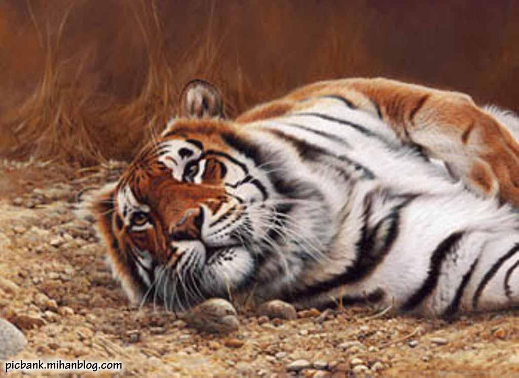 حیوانات | حیوان | نقاشی | نقاشی از حیوانات | نقاشی حیوانات | حیوانات نقاشی شده | نقاشی های حیوانات | حیوانات زیبا | نقاشی های زیبا | نقاشی های زیبا از حیوانات | مدل نقاشی | عکس حیوانات | حیوانات مختلف | عکسهای زیبا از حیوانات مختلف | عکس | والپیپر حیوانات | والپیپر های زیبا از حیوانات | والپیپرهای زیبا | والپیپرهای حیوانات | عکس زیبا | عکسهای زیبا | والپیپر نقاشی | والپیپرهای نقاشی از حیوانات | بک گراند | بکگراند | بک گراندهای حیوانات | تصویر پس زمینه از حیوانات | تصاویر | تصویر زیبا | تصاویر پس زمینه | تصاویر پس زمینه زیبا از حیوانات | آرشیو عکس و تصویر | عکس با کیفیت | عکسهای باکیفیت | عکس های با کیفیت حیوانات | پیک بانک | پیکبانک |