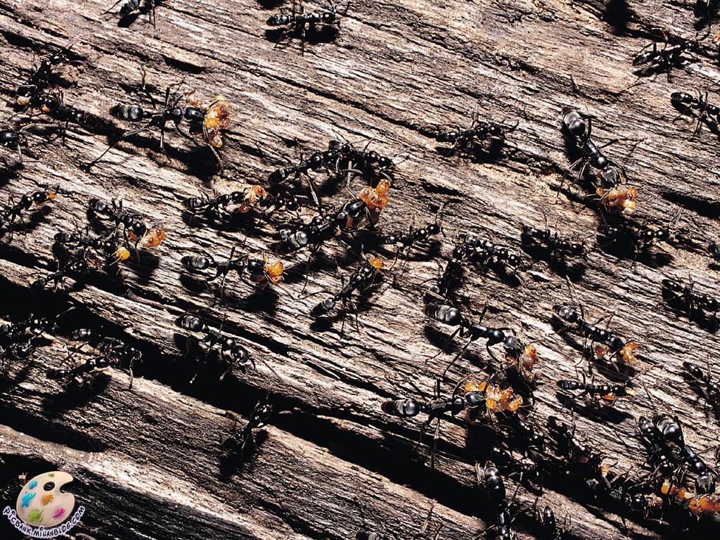 مورچه ، عکس مورچه ، عکسهای مورچه ، موورچه ها ، عکس مورچه ها ، عکسهای مورچه ها ، عکس ، عکسهای زیبا ، عکس های زیبا ، والپیپر ، والپیپر زیبا ، والپیپرهای زیبا ، عکس دیدنی ، عکسهای دیدنی ، والپیپر دیدنی ، والپیپرهای دیدنی ، جالب ، عکس جالب ، عکسهای جالب ، والپیپر جالب ، والپیپرهای جالب ، تصویر ، تصویر زیبا ، تصویر دیدنی ، تصویر جالب ، تصاویر ، تصاویر زیبا ، تصاویر جالب ، تصاویر دیدنی ، بکگراند ، بکگراند زیبا ، بکگراندهای زیبا ، بک گراند ، بک گراند زیبا ، بک گراندهای زیبا ، حیوان ، حیوانات ، عکس حیوانات ، عکسهای حیوانات ، والپیپر حیوانات ، والپیپرهای حیوانات ، بکگراند حیوانات ، بکگراندهای حیوانات ، بک گراند حیوانات ، بک گراندهای حیوانات ، جانوران ، جانوران مختلف ، جانور ، حیوانات زیبا ، حیوانات گوناگون ، جانوران گوناگون ، حیوانات مختلف ، مدل نقاشی ، مدل نقاشی حیوانات ، نقاشی حیوانات ، نقاشی از حیوانات ، آرشیو عکس ، آرشیو تصویر ، آرشیو عکس و تصویر ، مدل نقاشی زنبور ، نقاشی از زنبور ، picbank ، picbank.com ، picbank.mihanblog.com ، نگارخانه ، نشنال ژئوگرافی ، نشنال ژئوگرافیک ، عکس نشنال ژئوگرافیک ، عکسهای نشنال ژئوگرافیک ، والپیپر نشنال ژئوگرافیک ، والپیپرهای نشنال ژئوگرافیک ، عکس باکیفیت ، عکسهای باکیفیت ، والپیپر باکیفیت ، والپیپرهای باکیفیت ، عکس با کیفیت ، عکسهای با کیفیت ، والپیپر با کیفیت ، والپیپرهای با کیفیت ، عکس باکیفیت حیوانات ، عکسهای باکیفیت حیوانات ، عکس با کیفیت حیوانات ، عکسهای با کیفیت حیوانات ، عکس جالب حیوانات ، عکسهای جالب حیوانات ، عکس دیدنی حیوانات ، عکسهای دیدنی حیوانات ، عکس زیبای حیوانات ، عکسهای زیبای حیوانات ، HD ، عکس HD ، عکسهای HD ، والپیپر HD ، والپیپرهای HD ، عکس HD حیوانات ، عکسهای HD حیوانات ، جانورشناسی ، تحقیق روی حیوانات ، تحقیقات روی حیوانات ، حیات وحش ، حیوانات وحشی ، عکس حیات وحش ، عکسهای حیات وحش ، مدل نقاشی از حیوانات ، زیست شناسی ، زیست شناسی جانوری ، حشرات ، حشرات زیبا ، حشرات مختلف ، حشرات گوناگون ، عکس حشرات ، عکسهای حشرات ، والپیپر حشرات ، والپیپرهای حشرات ، حشره ، عکس حشره ، عکسهای حشره ، والپیپر حشره ، والپیپرهای حشره ، حشره شناسی ، تحقیق روی حشرات ، تحقیقات روی حشرات ، حشرات زیبا ، حشرات جالب ، حشرات دیدنی ، مدل نقاشی حشرات