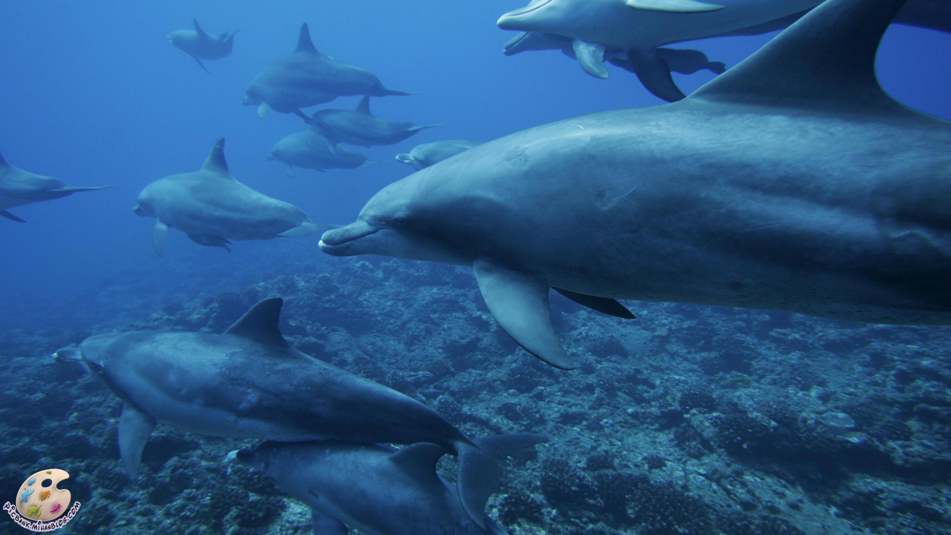دلفین ، عکس دلفین ، عکسهای دلفین ، انواع دلفین ، دلفینها ، عکس دلفینها ، عکسهای دلفینها ، انواع دلفینها ، تحقیق روی دلفین ، تحقیق روی دلفینها ، تحقیقات روی دلفینها ، تحقیقات روی دلفین ، حفاظت از دلفینها ، عکس ، عکس زیبا ، عکسهای زیبا ، عکسها ، والپیپر ، والپیپر زیبا ، والپیپرهای زیبا ، والپیپرها ، عکس باکیفیت ، عکس با کیفیت ، عکسهای با کیفیت ، عکسهای باکیفیت ، HD ، عکس HD ، عکسهای HD ، والپیپر HD ، والپیپرهای HD ، والپیپر با کیفیت ، والپیپر باکیفیت ، والپیپرهای باکیفیت ، والپیپرهای با کیفیت ، عکس با کیفیت بالا ، عکسهای با کیفیت بالا ، والپیپر با کیفیت بالا ، والپیپرهای با کیفیت بالا ، حیوان ، حیوانات ، جانور ، جانوران ، موجودات ، حیوانات دریایی ، دریایی ، جانوران دریایی ، جانداران ، موجودات دریایی ، جانداران دریایی ، تحقیقات ، تحقیقات دریایی ، تحقیقات جانواران ، تحقیقات جانداران ، تحقیقات موجودات ، تحقیقات گیاهان ، گیاهان دریایی ، تحقیقات جانوران دریایی ، تحقیقات حیوانات دریایی ، تحقیقات موجودات دریایی ، عکس حیوانات ، عکس جانوران ، عکس موجودات ، عکس جانداران ، عکس گیاهان ، عکس جانوران دریایی ، عکس جانداران دریایی ، عکس موجودات دریایی ، عکس حیوانات دریایی ، والپیپر حیوانات دریایی ، والپیپر جانوران دریایی ، والپیپر موجودات دریایی ، دریا ، دریاها ، اقیانوس ، اقیانوس ها ، اقیانوسها ، اقیانوس شناسی ، جانور شناسی ، جانور شناسی دریا ، زیست شناسی ، زیست شناسی دریا ، اکولوژی ، اکولوژی دریا ، اعماق دریا ، اعماق دریاها ، اعماق اقیانوس ، اعماق اقیانوسها ، بستر دریا ، بستر دریاها ، موجودات بستر زی ، موجودات بسترزی ، بستر اقیانوس ، بستر اقیانوسها ، بسترهای دریا ، بسترهای ماسه ای ، بسترهای اقیانوسها ، مرجان ، مرجانی ، صخره مرجانی ، صخره های مرجانی ، آبسنگ مرجانی ، آبسنگهای مرجانی ، ریف مرجانی ، ریفهای مرجانی ، موجودات مرجانی ، اجتماعات مرجانی ، اجتماع مرجانی ، زندگی اعماق دریا ، زندگی اعماق اقیانوس ، ماهی های صخره های مرجانی ، ماهی های ریفهای مرجانی ، ماهی ، ماهی ها ، ماهیها ، اجتماع ماهی ها ، اجتماعات ماهی ها ، پیک بانک ، نگارخانه ، والپیپر حیوانات ، والپیپر جانوران ، والپیپر موجودات ، والپیپر جانداران ، picbank ، picbank.com ، picbank.mihanblog.com ، pic bank ، مرجانها ، زیر دری