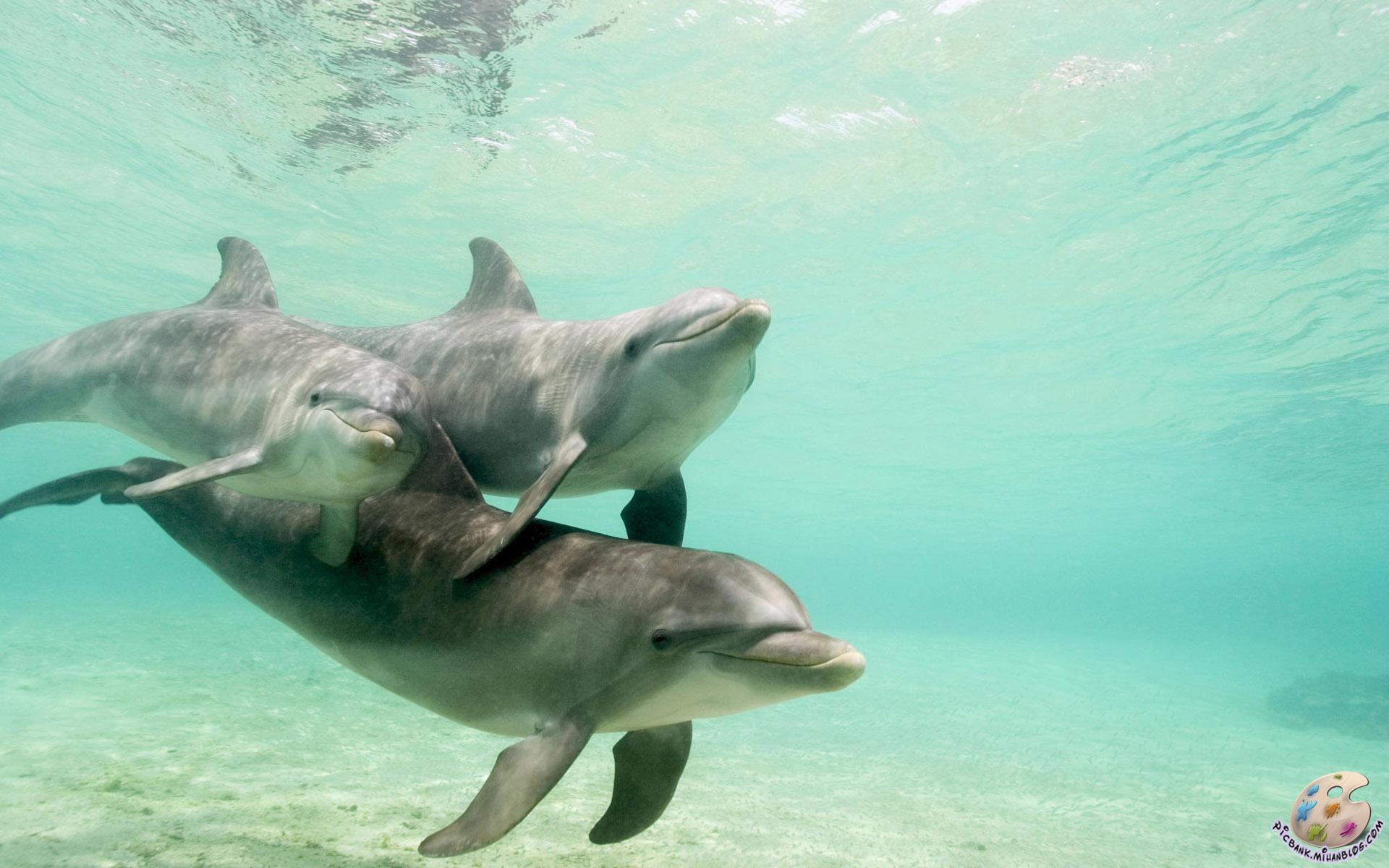 دلفین ، عکس دلفین ، عکسهای دلفین ، والپیپر دلفین ، والپیپرهای دلفین ، دلفینها ، عکس دلفینها ، عکسهای دلفینها ، والپیپر دلفینها ، والپیپرهای دلفینها ، تحقیق روی دلفینها ، تحقیقات روی دلفینها ، حفاظت از دلفینها ، تحقیقات روی دلفین ، تحقیق روی دلفین ، انواع دلفین ، انواع دلفینها ، عکس ، عکس زیبا ، عکسهای زیبا ، عکسها ، والپیپر ، والپیپر زیبا ، والپیپرهای زیبا ، والپیپرها ، عکس باکیفیت ، عکس با کیفیت ، عکسهای با کیفیت ، عکسهای باکیفیت ، HD ، عکس HD ، عکسهای HD ، والپیپر HD ، والپیپرهای HD ، والپیپر با کیفیت ، والپیپر باکیفیت ، والپیپرهای باکیفیت ، والپیپرهای با کیفیت ، عکس با کیفیت بالا ، عکسهای با کیفیت بالا ، والپیپر با کیفیت بالا ، والپیپرهای با کیفیت بالا ، حیوان ، حیوانات ، جانور ، جانوران ، موجودات ، حیوانات دریایی ، دریایی ، جانوران دریایی ، جانداران ، موجودات دریایی ، جانداران دریایی ، تحقیقات ، تحقیقات دریایی ، تحقیقات جانواران ، تحقیقات جانداران ، تحقیقات موجودات ، تحقیقات گیاهان ، گیاهان دریایی ، تحقیقات جانوران دریایی ، تحقیقات حیوانات دریایی ، تحقیقات موجودات دریایی ، عکس حیوانات ، عکس جانوران ، عکس موجودات ، عکس جانداران ، عکس گیاهان ، عکس جانوران دریایی ، عکس جانداران دریایی ، عکس موجودات دریایی ، عکس حیوانات دریایی ، والپیپر حیوانات دریایی ، والپیپر جانوران دریایی ، والپیپر موجودات دریایی ، دریا ، دریاها ، اقیانوس ، اقیانوس ها ، اقیانوسها ، اقیانوس شناسی ، جانور شناسی ، جانور شناسی دریا ، زیست شناسی ، زیست شناسی دریا ، اکولوژی ، اکولوژی دریا ، اعماق دریا ، اعماق دریاها ، اعماق اقیانوس ، اعماق اقیانوسها ، بستر دریا ، بستر دریاها ، موجودات بستر زی ، موجودات بسترزی ، بستر اقیانوس ، بستر اقیانوسها ، بسترهای دریا ، بسترهای ماسه ای ، بسترهای اقیانوسها ، مرجان ، مرجانی ، صخره مرجانی ، صخره های مرجانی ، آبسنگ مرجانی ، آبسنگهای مرجانی ، ریف مرجانی ، ریفهای مرجانی ، موجودات مرجانی ، اجتماعات مرجانی ، اجتماع مرجانی ، زندگی اعماق دریا ، زندگی اعماق اقیانوس ، ماهی های صخره های مرجانی ، ماهی های ریفهای مرجانی ، ماهی ، ماهی ها ، ماهیها ، اجتماع ماهی ها ، اجتماعات ماهی ها ، پیک بانک ، نگارخانه ، والپیپر حیوانات ، والپیپر جانوران ، والپیپر موجودات ، والپیپر جانداران ، pi