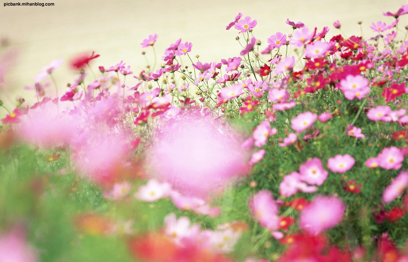 عکس ، عکسهای زیبا ، عکسهای لطیف ، عکس های زیبا ، عکس های لطیف ، گل ، گلها ، گل های زیبا ، گلهای زیبا ، گل زیبا ، گلهای لطیف ، گل های لطیف ، گل صحرایی ، گلهای صحرایی ، گل رنگارنگ ، گلهای رنگارنگ ، والپیپر ، والپیپرهای زیبا ، والپیپر گل ، والپیپرهای گل ، والپیپرهای گل ،